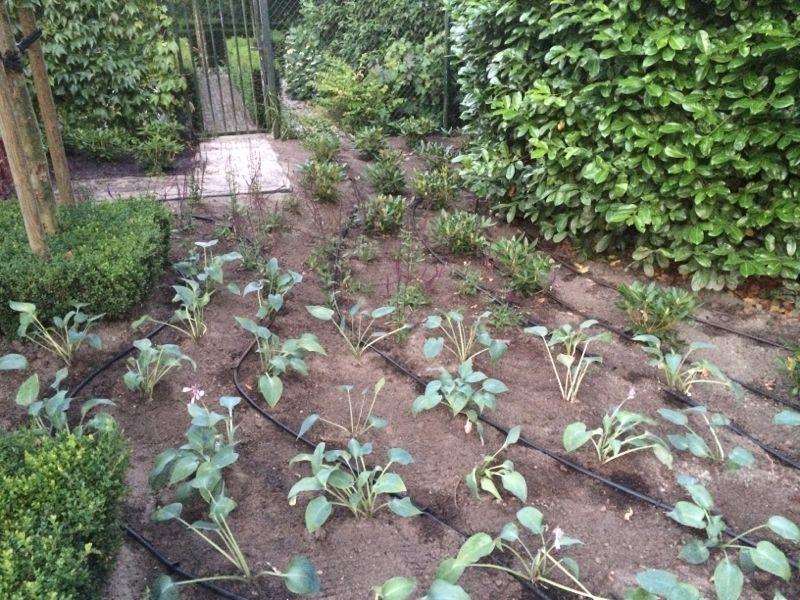 Tuinberegening en Vijverfilter